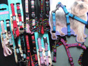 Puppy Collars & Harnesses