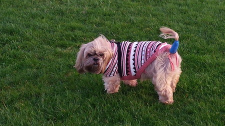 Lovely Leah sent in her picture, her jumper kept her warm after her tail operation\\n\\n04/01/2017 22:42