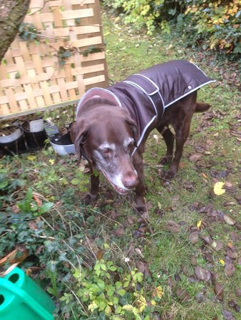 Bailey sent in another picture, wearing his coat he bought last year and enjoying the garden still at age 11!!\\n\\n20/11/2016 20:38
