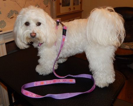Moppie sent in her picture. Beautiful girl in her new pink harness!\\n\\n30/06/2014 14:11