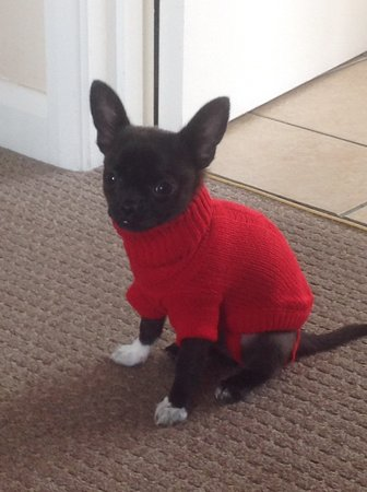 Just look how warm tiny Beau looks in his little red jumper. 2015\\n\\n17/08/2015 08:41