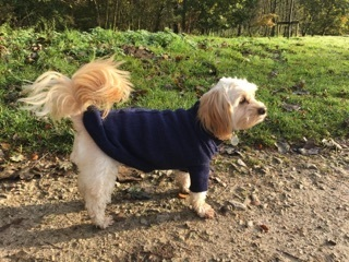 Polly the poodle sent in her pic in her midweek blue jumper!\\n\\n20/11/2016 21:26