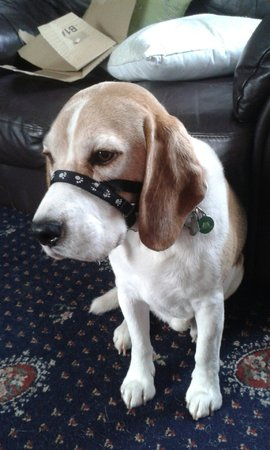 Harry's mum says Harry used to hate headcollars until she found this mikki easy steer one for him\\n\\n20/11/2016 20:41