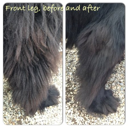 Just look how well the COARSE coat king works on a Newfoundlands legs\\n\\n30/06/2014 22:57