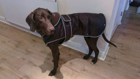 Kali sent in her picture. Keeping warm in her new coat. Feb 2015\\n\\n02/03/2015 22:00